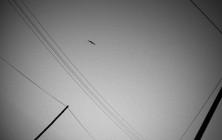 proie_ombre_49